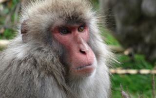 murphy monkey